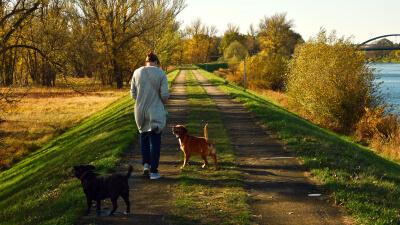DogWorkers - Software für DogWalker und Hundebetreuer