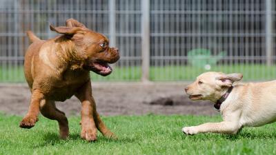 DogWorkers - Software für Hundetagesstätten und Hundepensionen