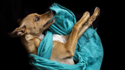 DogWorkers - Software für Tierphysiotherapeuten
