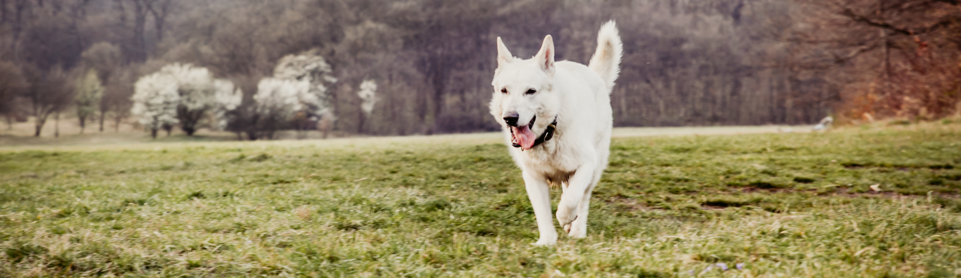 Wechseln von Dog-Plan-It oder Kursolino